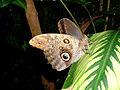 Butterfly Eye (48179011).jpg