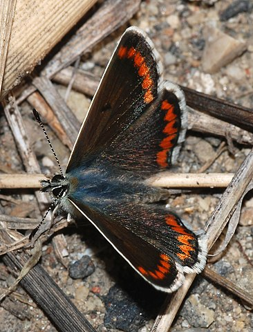 Butterfly November 2007-10.jpg