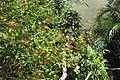 Butterfly Rainforest FMNH 47.jpg