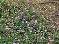 Butterfly garden in Rakefet (1).jpg