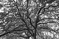Bw tree (8503362350).jpg
