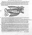 C. Gesner, Medici tigurini historiae animalium Wellcome L0023284.jpg
