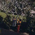 COLLECTIE TROPENMUSEUM Balinese vrouw tijdens het brengen van offers bij een altaar op het woonerf TMnr 20017938.jpg