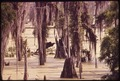 CYPRESS SWAMP BETWEEN LA PLACE AND NEW ORLEANS - NARA - 546181.tif