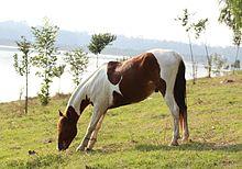 El caballo 220px-Caballo_en_el_Lago_de_Guadalupe%2C_M%C3%A9xico.
