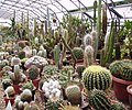 Cacti ,Chester Zoo - geograph.org.uk - 190589.jpg