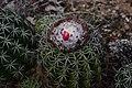 Cactus (45176066985).jpg