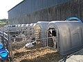 Calves in crates, Pencwarre - geograph.org.uk - 524759.jpg
