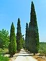Camí de Xiprers baixant de Mare de Déu de la Riera - panoramio.jpg