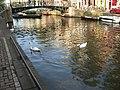 Canal-Amsterdam-2.jpg