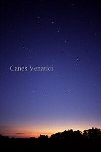 CanesVenaticiCC.jpg