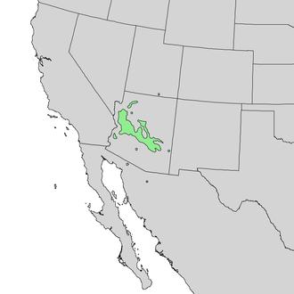 Canotia - Image: Canotia holacantha range map 2