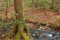 Carbaugh Run Natural Area (4) (8135551073).jpg