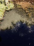 Caserta baño de Venus 18.jpg