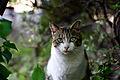 Cat-Roppongi.jpg