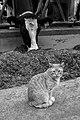 Cat (40085178280).jpg