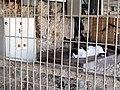 Cat at Tel Aviv Marina - October 2009 (4025009983).jpg