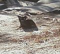 Cat on Stone Mt Ga.jpg