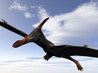 <i>Caulkicephalus</i> genus of reptiles (fossil)