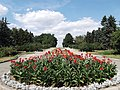 Central Botanic Garden of NASU - panoramio (6).jpg