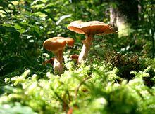 بحث عن الطبيعة،بحث شامل عن الطبيعة 220px-ChampiEnForet.