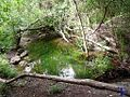 Charca verde - panoramio (1).jpg
