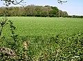 Charltondown Covert - geograph.org.uk - 488431.jpg
