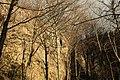 Cheile Vârghișului - Varghis Gorges - panoramio (14).jpg