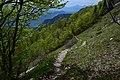 Chemin Col Vert Forêt.jpg