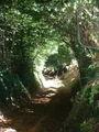 Chemin creux.JPG