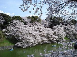 Sakura, Chidorigafuchi moat, Tokyo Imperial Pa...