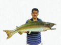 Chinook salmon found by Roger Castillo on San Tomas Aquino Creek mid-October 1996.png