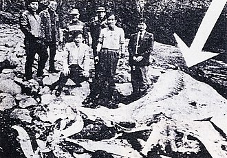 Chibu, Shimane - Chisshī, a beached basking shark that was named after Nessy.