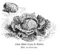 Chou Milan trapu de Roblet Vilmorin-Andrieux 1904.png