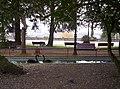 Cisnes Parque Rosalía de Castro, Lugo 3.jpg