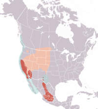 Clarks grebe distribution map
