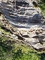 Cliff near Rozewie in Poland - Panoramio 66183736.jpg
