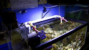Reef aquarium - An example of a closed loop water circulation system