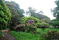 Colour in the grounds of Muncaster Castle - geograph.org.uk - 1335653.jpg
