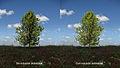 Comparativa de imagen con oclusión ambiental y sin oclusión ambiental.jpg