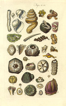 Conchological Manual Plate 001.jpg