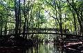 Congaree National Park (365e21ba-b6fa-4298-9891-4ec33af368ba).jpg