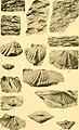 Contribution à la carte géologique de l'Indo-Chine. Paléontologie (1908) (20497441798).jpg