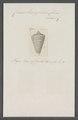 Conus lorenzianus - - Print - Iconographia Zoologica - Special Collections University of Amsterdam - UBAINV0274 086 07 0055.tif