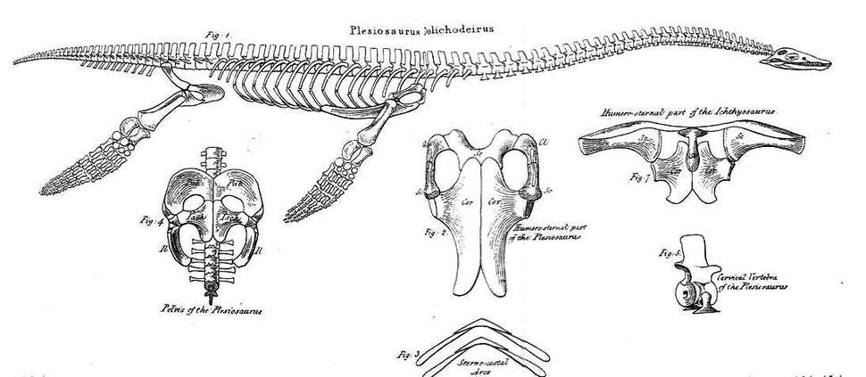 Conybeare Plesiosaur 1824