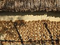 Cow Dung (Fuel) Drying - Sukumari Village - Sundarban District - South of Kolkata - India - 02 (12347219033).jpg