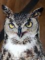 Crafty Owl (5779049566).jpg