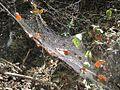 Craighead Forest Park 2011-10-02 Jonesboro AR 005.jpg