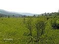 Cranberry Glades - Summer.jpg