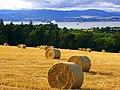 Cromarty Firth - panoramio (1).jpg